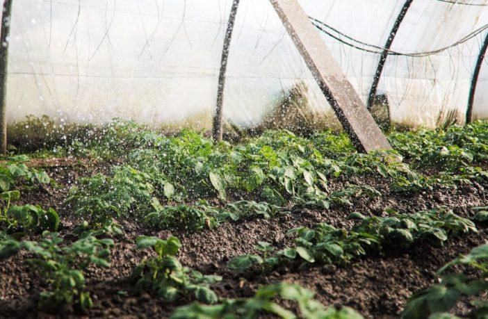 Organischer Boden